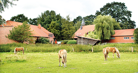Die Pferdeweide himterm Dorfgemeinschaftshaus in Brokoloh.