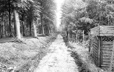 Rund 700 Quadratmeter Wald mussten für die Trasse des Radweges gerodet werden.
