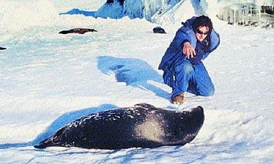 Ganz vorsichtig tastet sich Regina Eisert in der Antarktis an ein Robbenbaby heran. Die Estorferin betreibt in McMurdo Sound an der Küste des Rossmeers Forschungsstudien an der Weddelrobbe. Foto: Privat