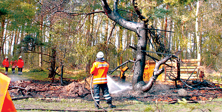 Waldstück in Brand